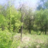 Bulgaria obesrved the Europian Week of Forest