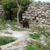 Three ponies and two bears obtained the Zoo in Varna