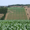 The prices of agricultural lands - up 19 %