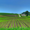 The increase of agricultural land prices will continue, but fluently