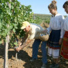 The programme for aid of the wine-producing sector has started