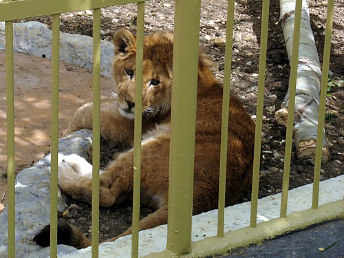 Sofia Zoo renewed - new cells and new animals
