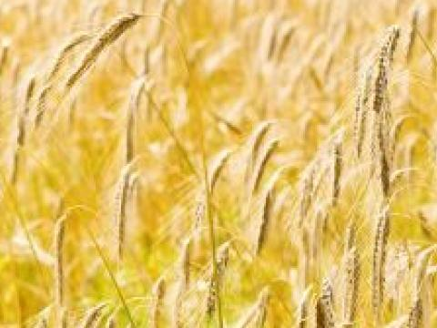 Bulgaria gets third place in Europe as grain exporter