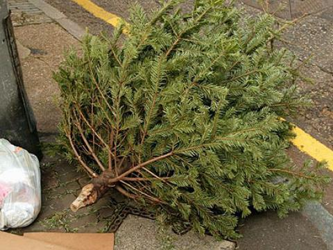 "Greener holidays: ""Christmas tree in a plant pot"""